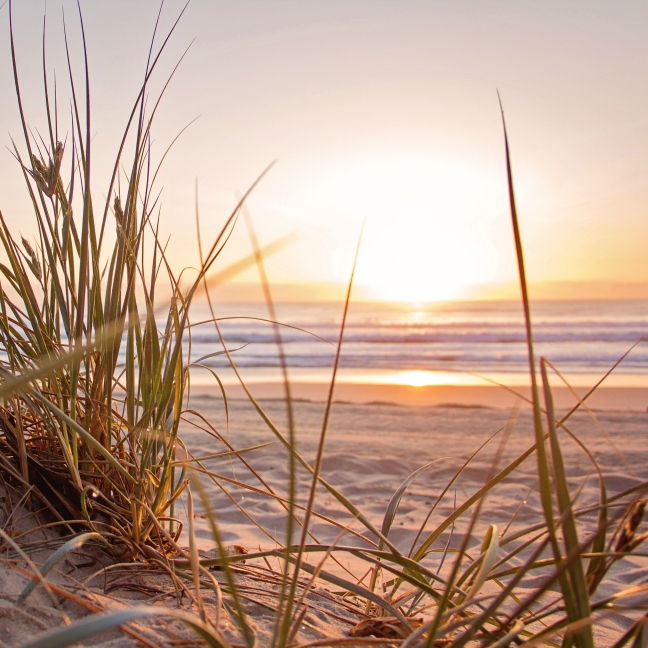 A photo of a beach at dawn, beach grass is in the forefront, the sand and ocean in the distance, there is a pale, warm light.